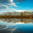 Forest and trees reflections in water nature photo by Mario Cehulic