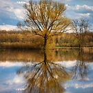 Nature photo of a tree and deep blue sky water reflection by Mario Cehulic