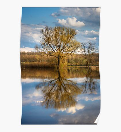 Nature photo of a tree and deep blue sky water reflection Poster