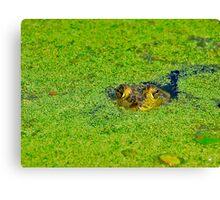 Bullfrog Stare Canvas Print