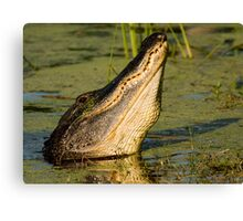 Alligator Display Canvas Print