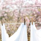...fresh laundry and magnolias.......... by Jane Anastasia Studio