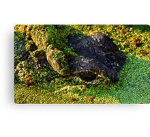 Mama Gator with Baby Canvas Print