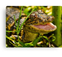 Baby Gator in the Weeds Canvas Print