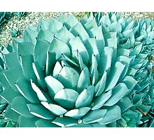 Giant Agave Photographic Print