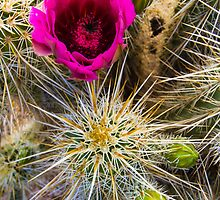 Spikes and Petals by BGSPhoto