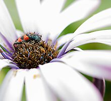 insect and flower by Patrizio Martorana