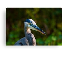 Great Blue Heron Portrait Canvas Print