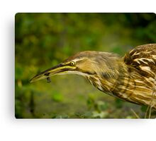 American Bittern and Black Fish Canvas Print