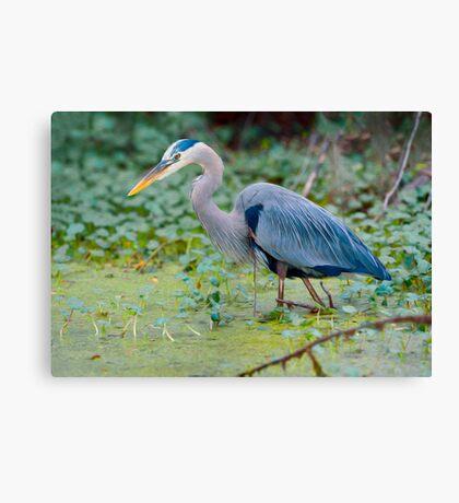 Great Blue Heron Digital Painting Canvas Print