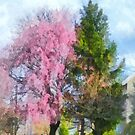 Weeping Cherry and Evergreen by Susan Savad