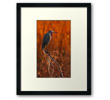 Little Blue and Web Framed Print