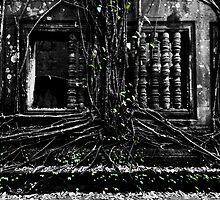 Entangled Walls, Cambodia by Michael Treloar