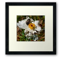 Crawling with Beetles Framed Print
