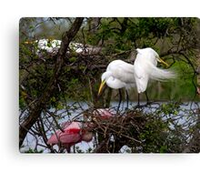 Great Egret Nesting Pair Canvas Print