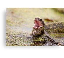 Water Moccasin Display Canvas Print