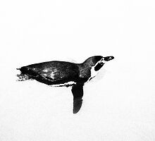 Print - Penguin by mrparkini