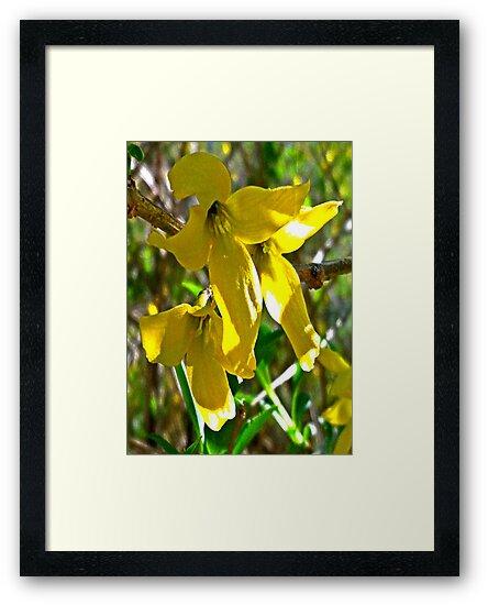 The Sunshine Flowers Dance by Kieran Rundle