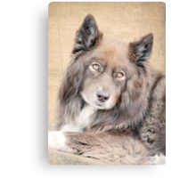 Wolf Eyes Canvas Print