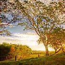 Dawsley, Adelaide Hills SA by Mark Richards