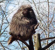 Mr.Porcupine by ClayBearStudio