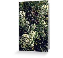 Wondrous Whites of Spring Greeting Card