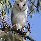 Hoot you looking at  Barn Owl Canberra Australia  by Kym Bradley