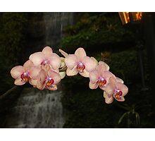Fabulous Orchids Photographic Print