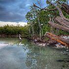 Clamy Waters by Michael Damanski