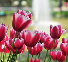 More Tulips at Cape Fear by Lolabud