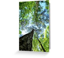 Trees at Cape Fear Greeting Card