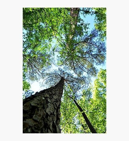 Trees at Cape Fear Photographic Print