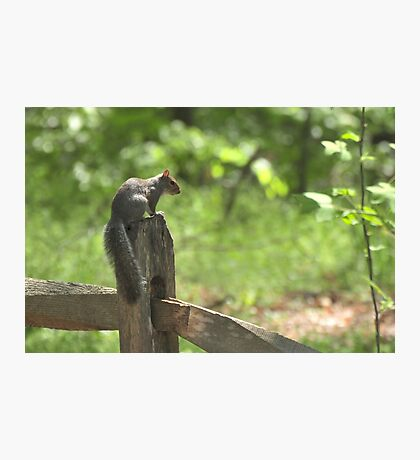 Squirrel at Cape Fear Photographic Print