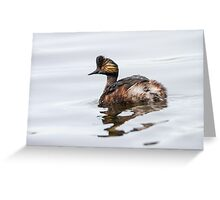 Eared Grebe (Podiceps nigricollis): The Quick Change Artist Greeting Card