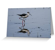 Black-necked Stilt (Himantopus mexicanus): When Larvae Metamorphose, Waders Feast Greeting Card