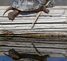 Western Pond Turtle (Actinemys mamorata): Aaahh! Warmth! by John Williams