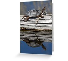 Western Pond Turtle (Actinemys mamorata): Aaahh! Warmth! Greeting Card