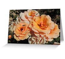 Bees & Roses  Greeting Card