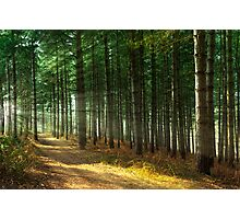 Forest Sun Rays Photographic Print