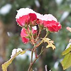Roses n Snow by ClayBearStudio
