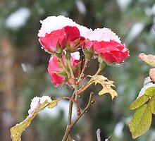 Roses n Snow by ClayBearStudio