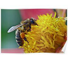 Honey bee nice Poster