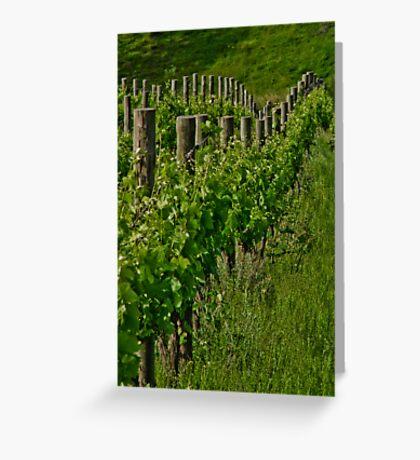 Vineyard III Greeting Card