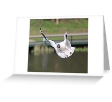 Seagal in flight and motion Greeting Card
