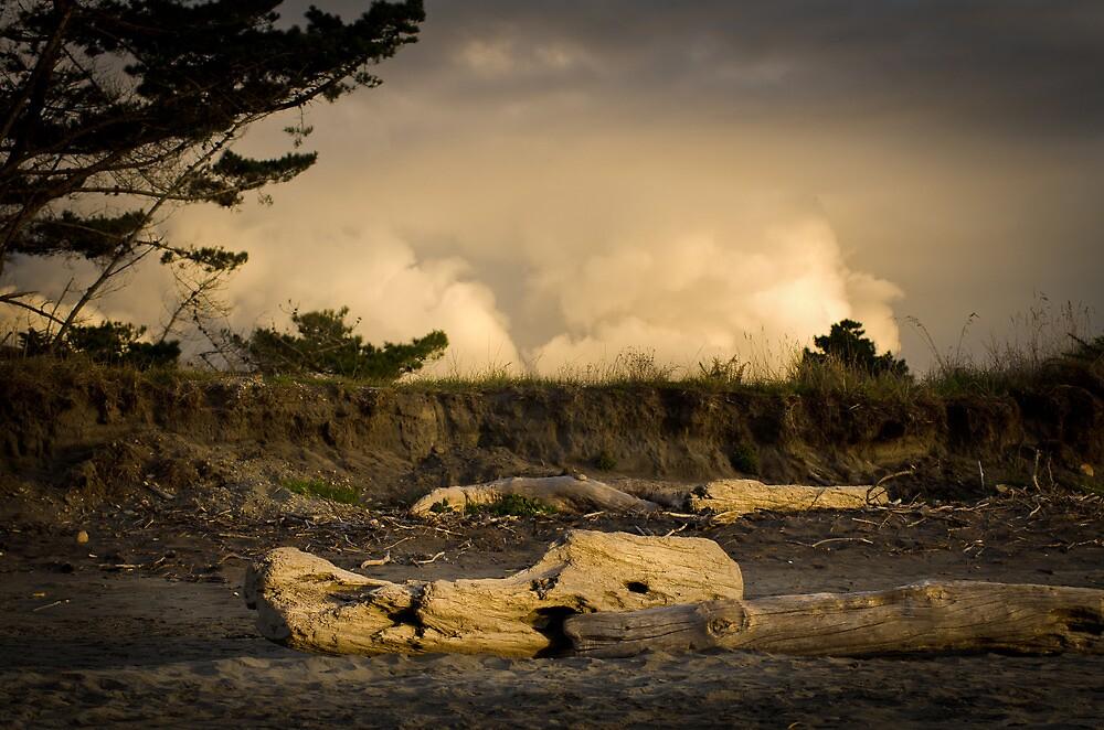 Driftwood West coast of New zealand - South Island by Mick Kupresanin