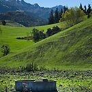 Green Hills  by Mick Kupresanin