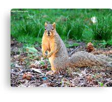 Silly Squirrel Canvas Print