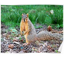 Silly Squirrel Poster