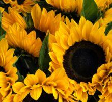 Sunflower Sensation Sticker