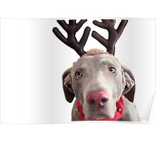 Rudolph the Red Nosed Reindeer? Poster
